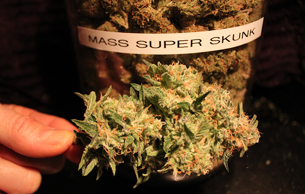 Massachusetts Super Skunk Strain