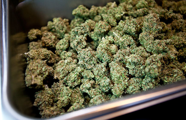 A metal pan holds hundreds of dried bud from dispensaries in North and South California