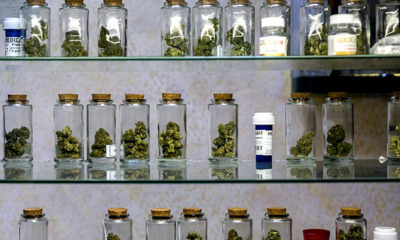 A shelf of jars filled with buds at a compassion club in Canada.
