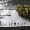 A ziploc bag indicates that the Harlequin strain, a high cbd content strain, is ready to go into the bag.
