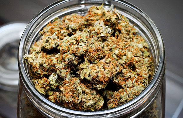 Jar of dank buds that may be used to make Kush Cream's Throat Spray for a Sore Throat
