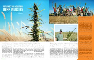 A spread from Issue 10 of Cannabis Now shows hemp farms and the title.