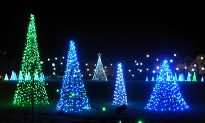 A Cluster of Christmas Trees Made Up of Green and Blue Lights
