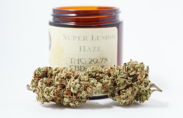 Super Lemon Haze Strain Review C.R.A.F.T. Cannabis