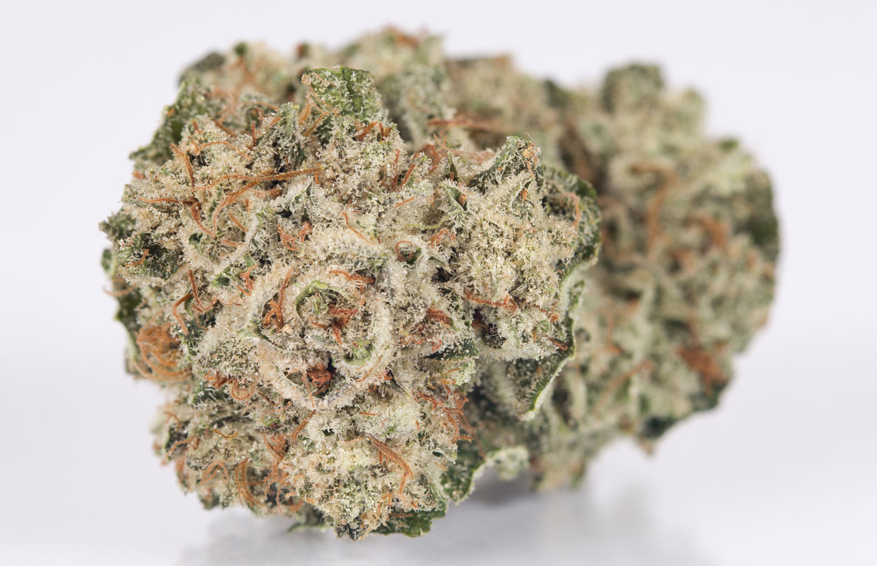 Gorilla Glue Review >> Gorilla Glue 4 The Popular And Potent Diesel Heavy Hybrid