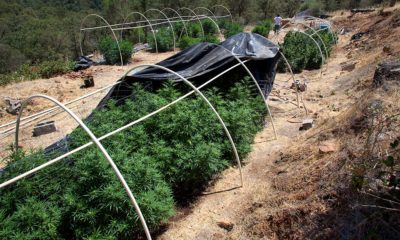 Lebanon Moves to Legalize Medical Pot