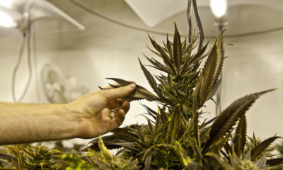 Cannabis Caves to 'Corporate Responsibility'