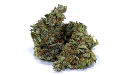 chocolope strain review